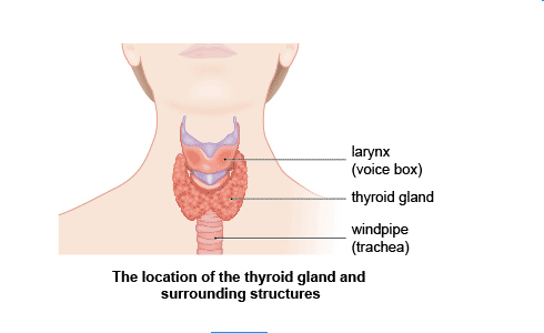 Relation Between Thyroid And Hair Loss